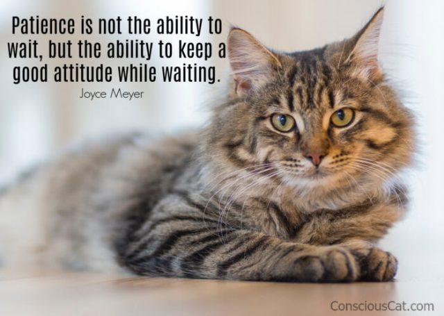 patience-waiting-cat