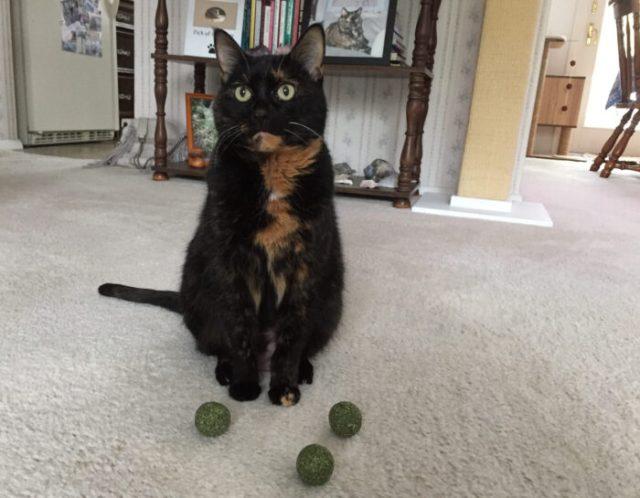 catnip-balls