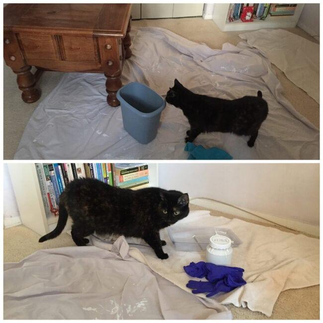 Allegra-cat-painting-helper