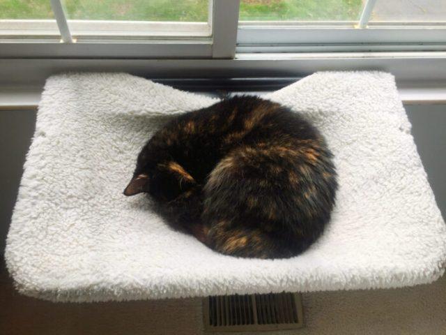 cat-sleeping-window-perch
