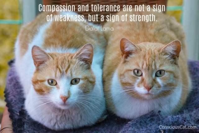 compassion-tolerance-cat