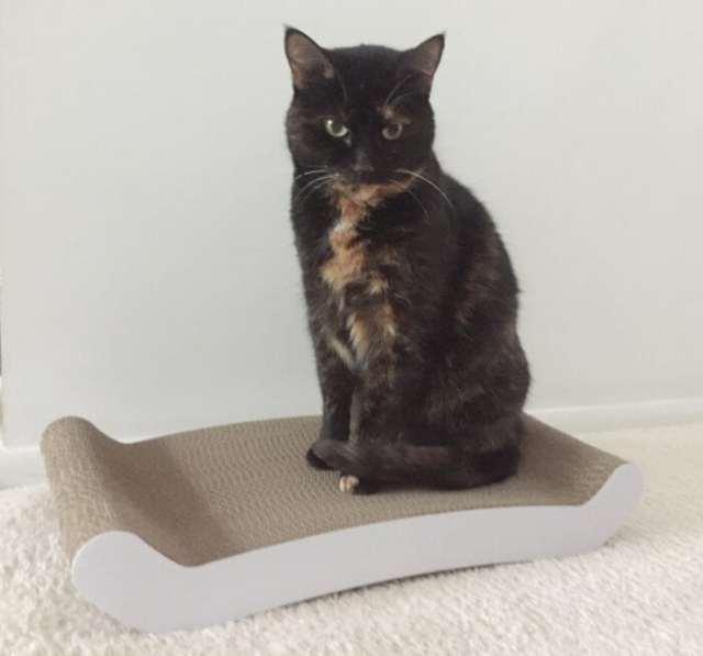 petfusion-cat-scratching-pad