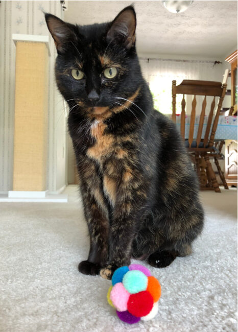 cat-with-ball