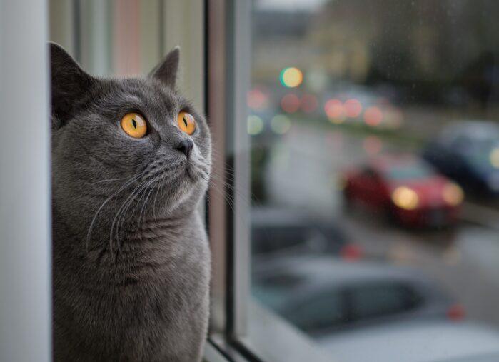 cat-window-dream