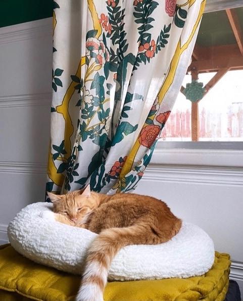 cat-bed-window