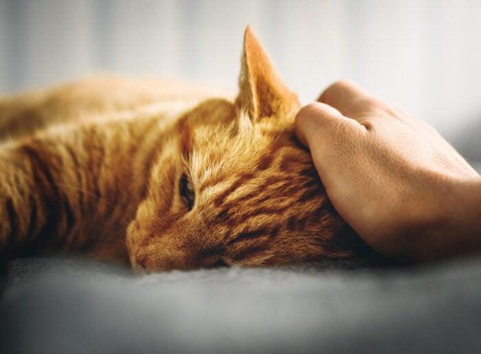 cat-hand-petting