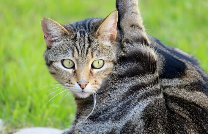cat-yoga-exercise