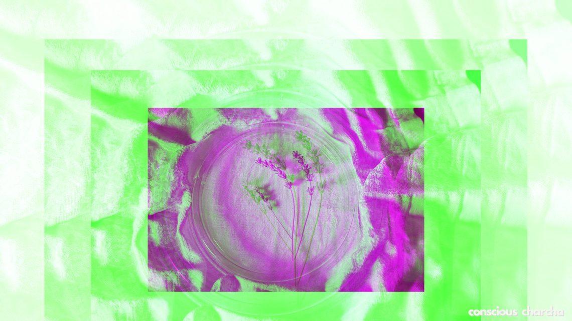 plant in a Petri dish. Conscious living