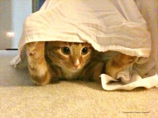 Knox Hiding