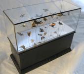 Moth Case