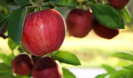 Seasonal-Foods-September_featured_article_628x371