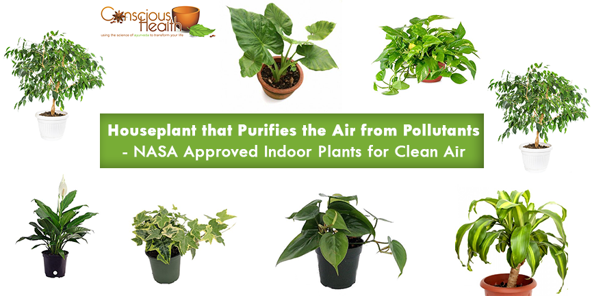 Houseplant that Purifies the Air from Pollutants. - NASA ... on indoor spices, indoor trees, indoor organic gardening, indoor palms, indoor orchids, indoor plants, indoor ferns, indoor shrubs, indoor seedlings, indoor roses,