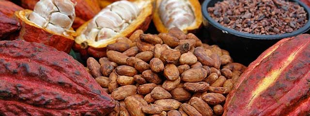 Benefits Of Cacao Nibs: Brain Smart And Better Than Chocolate