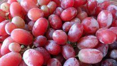Organic-Grapes