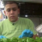Looking Upward: Vertical Farms Offer a Bright Future for Hungry Cities