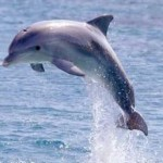 Why Dolphins Don't Fight Back and What They Teach Us About Benevolence
