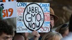 Monsanto alone has poured roughly $14 million into local 2014 ballot fights opposing GMO legislation. (Photo: CT Senate Dem/cc/flickr)