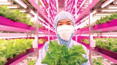 japan indoor farming