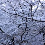 Be Mindful as the Ayurvedic Season Shifts