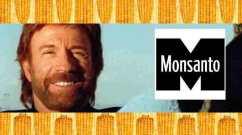 monsanto chuck norris