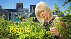 Dr Sara Wilkinson tends a tomato crop on a rooftop above Broadway at UTS. Photo: Peter Morris