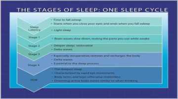 Sleep cycle chart courtesy of http://www.fitandfabforlife.us