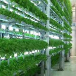 Vertical Farming Crop Yields That Will Blow Your Mind