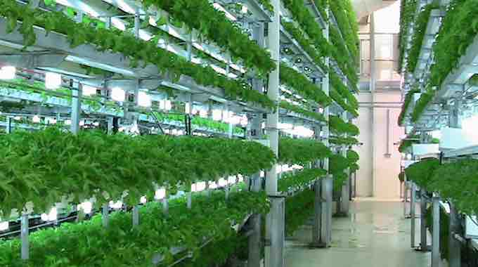vertical-farm-yield