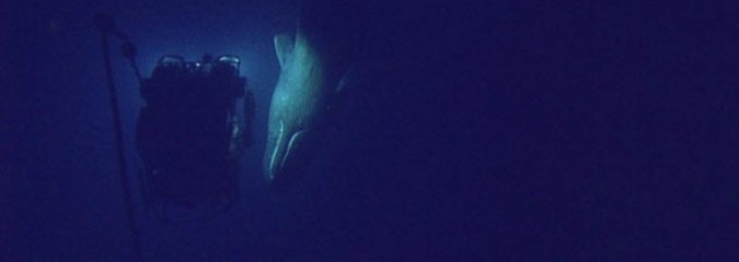 This Close Encounter with Majestic Sperm Whale Should Inspire Action to Protect Marine Life