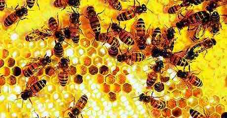 7 Powerful Anti-Cancer Benefits of Bee Propolis: It's More Than Honey