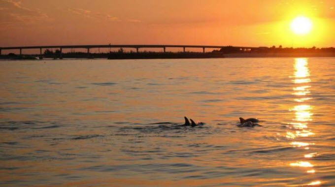 Through intensive photo-ID surveys conducted along the Indian River Lagoon, which were carried out over a six- and-a-half year period, the researchers were able to learn about the association patterns as well as movement behavior and habitat preferences of some 200 individual dolphins. Credit: Harbor Branch Oceanographic Institute, Florida Atlantic University