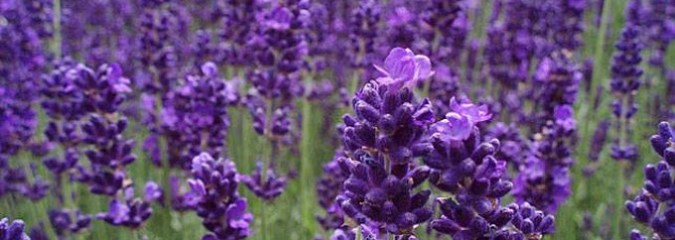 12 Plants that Repel Unwanted Insects