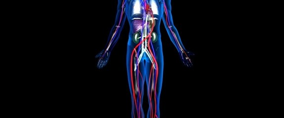 Scientists Discover A New Part Of The Human Body