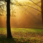 4 Eccentric Ways Trees Can Heal You