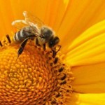 Norway Creates World's First 'Bee Highway' to Save Endangered Pollinators