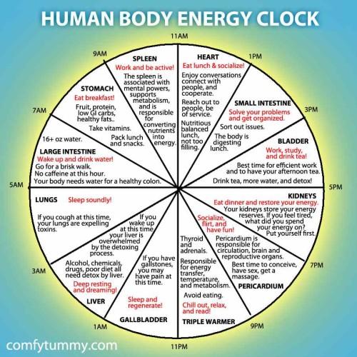 human-body-energy-clock