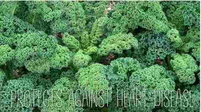 kale-heartbenefits-compressed