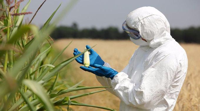 GMO-scientist-compressed