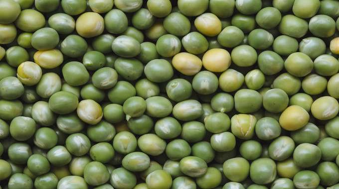 peas-protein-compressed