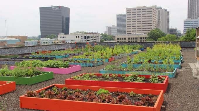 Homeless-Rooftop-Garden-compressed