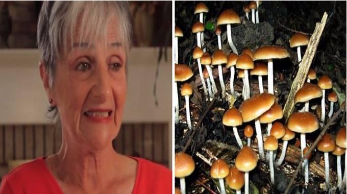Magic Mushroom-compressed