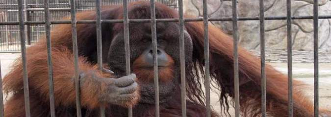 5 Videos That Prove Animals REALLY Don't Want To Be In Zoos