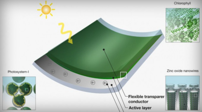solar panels from grass clippings