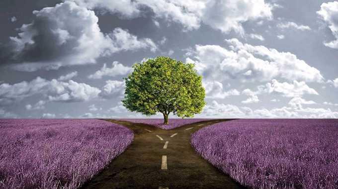 tree path karma