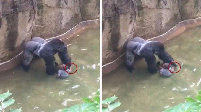 Gorilla-compressed