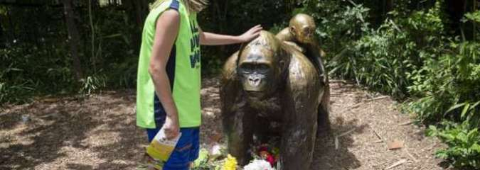 20 Year Old Video Shows Gorilla Save Toddler's Life After He Fell into Chicago Zoo Enclosure