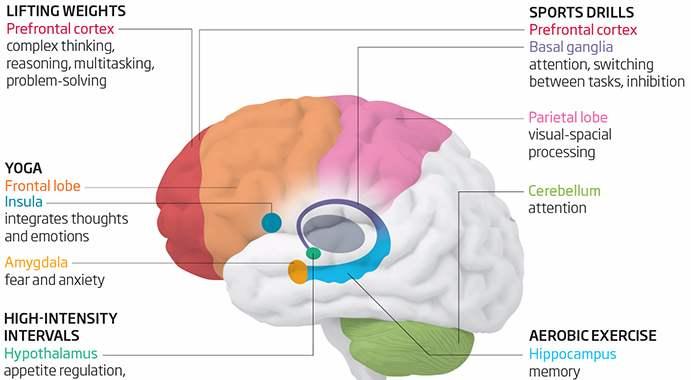 brain exercise diagram