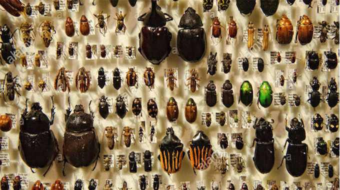 Insects on display-compressed
