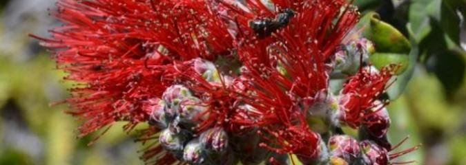 Bees in Peril as First Species Added to Endangered Species List