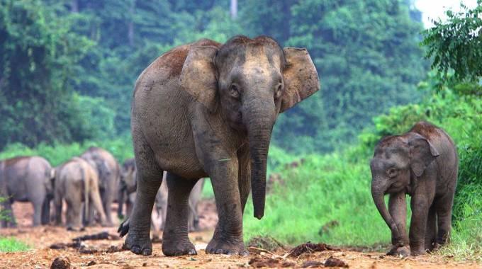 Credit: Save Elephant Foundation